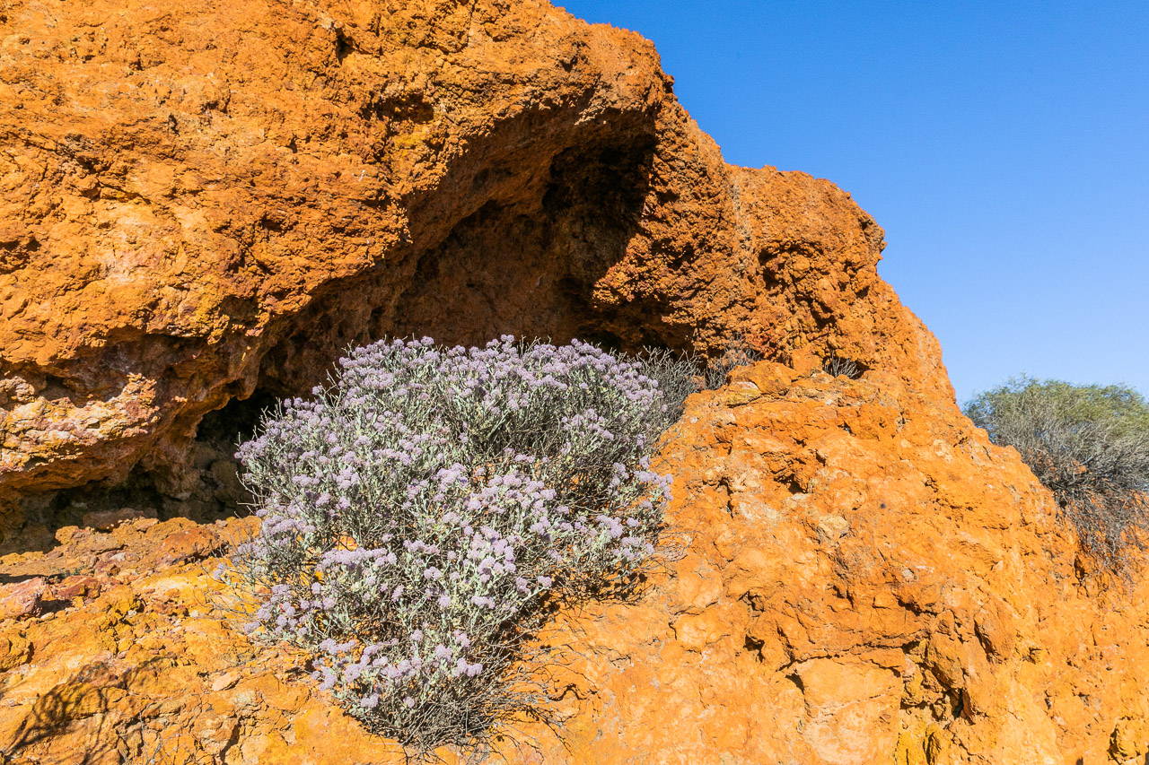 The wildflowers decorate the entrance to a cave in the breakaway at Nallan Station, WA