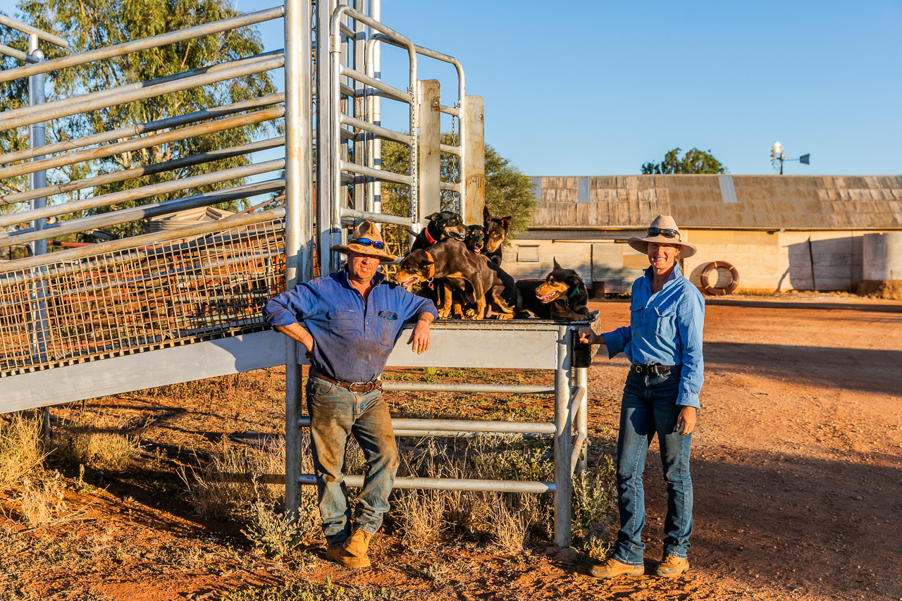 Nallan Station owners and their working dogs in the yards