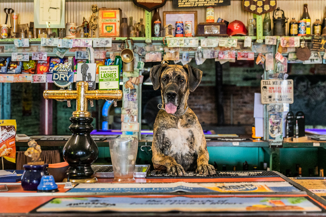 Tonight's skimpy at the Broad Arrow Tavern is Bella
