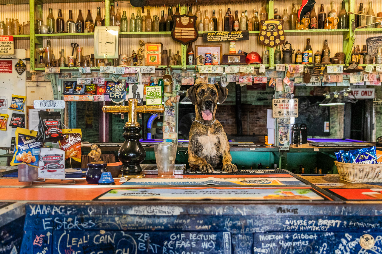 The bitch behind the bar at the Broad Arrow Tavern - a five year old great dane cross called Bella