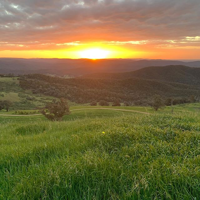 Sunset 🙌 * * * * * * * * * ________________ #elevation652 #seehighcountry #melbourniseme #farmstaybnb #northeastvictoria #getaway #weekendsinthecountry #countrylife #visitkingvalley #winecountry #skyvineyards #proseccocountry #redbankwines #australia #eco #topoftheworld #views #sunset  #winery #countryescape #countryliving #beautifulaccommodatio #sunrise #freshair #wanderlust #timeout #weekendgetaway #sustainable #vineyard #wine