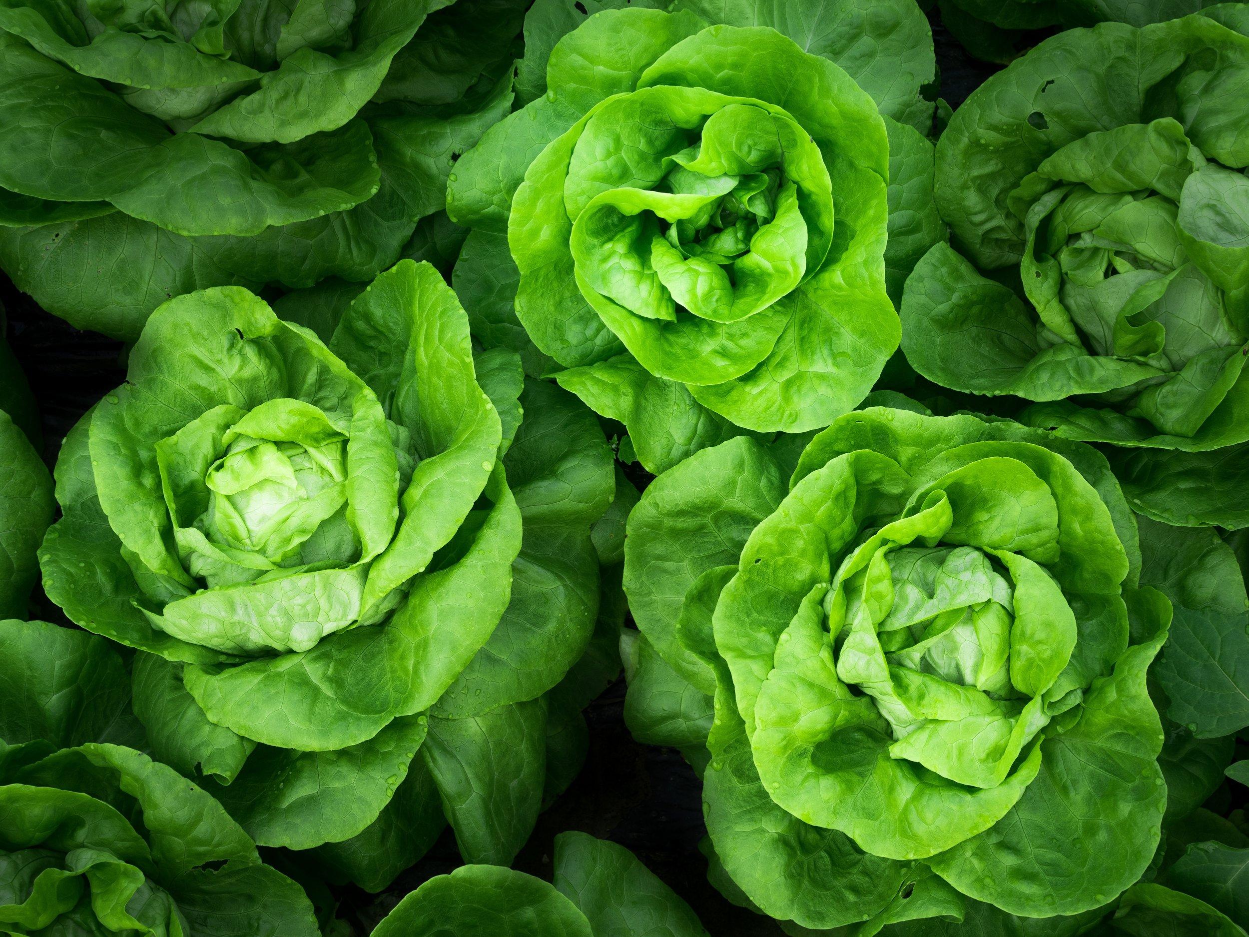 Simple Salad - california iceberg lettuceginger sesame