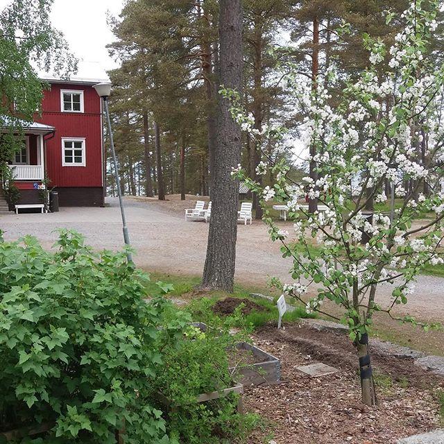 Ännu ligger isen på havet och snön i skogen, men snart är våren här! Den som väntar på något gott... 🌸