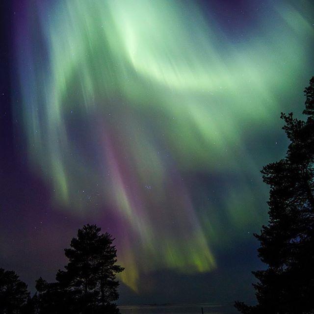 Vilket skådespel över lägergården! Snart är norrskenssäsongen över, har du sett vackra norrsken i vinter? Kanske du rent av har sett dom på klipporna på Pörkenäs?