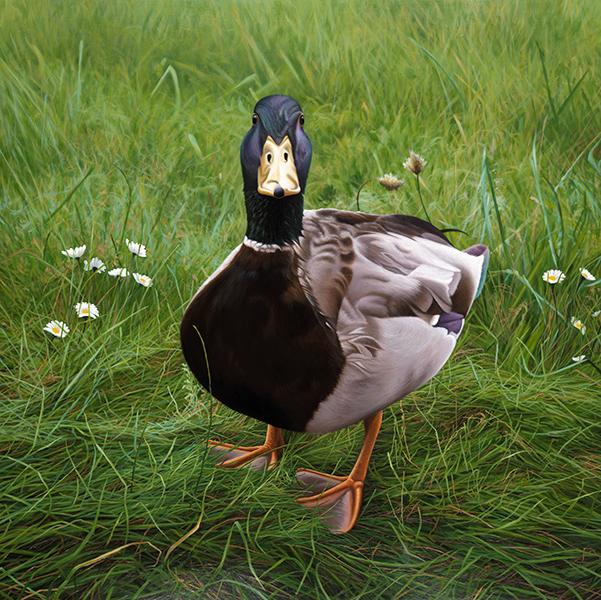 Charlie on Grass