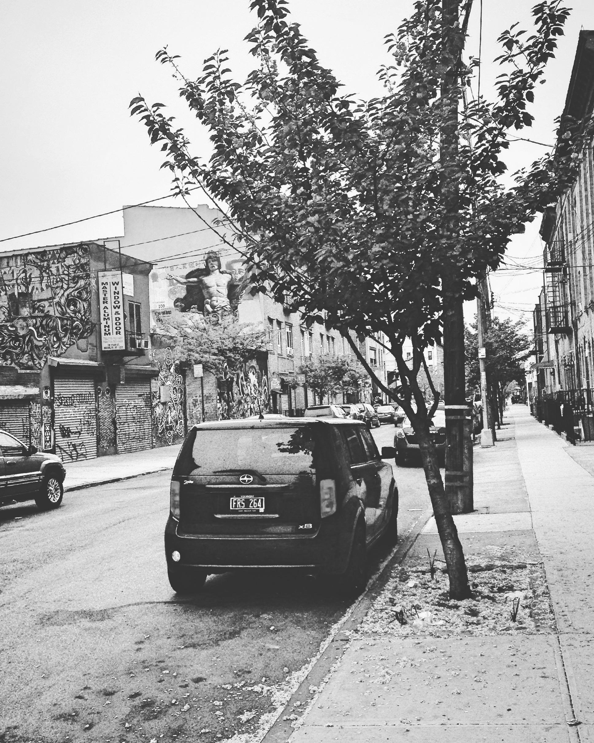 StarrStreet.jpg
