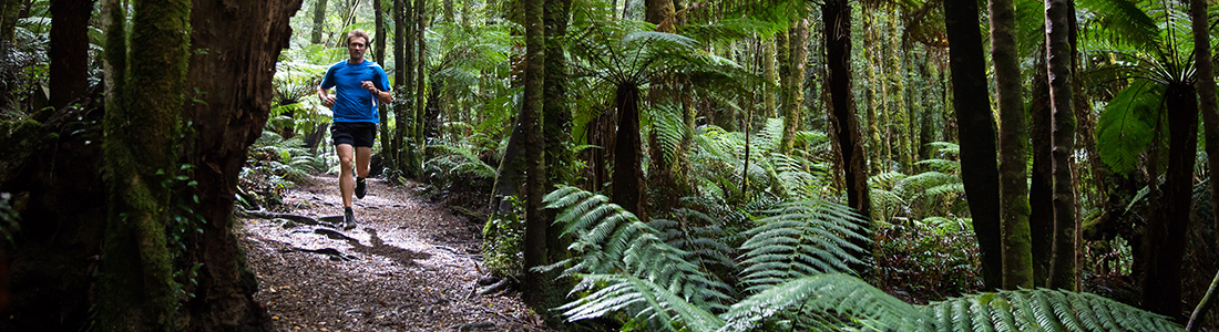 Who you calling' a lumberjack? Yes, it's that goddam pretty up there..ferns and forests and one of Australia's largest trees - Ada. Come run round her. She likes that.
