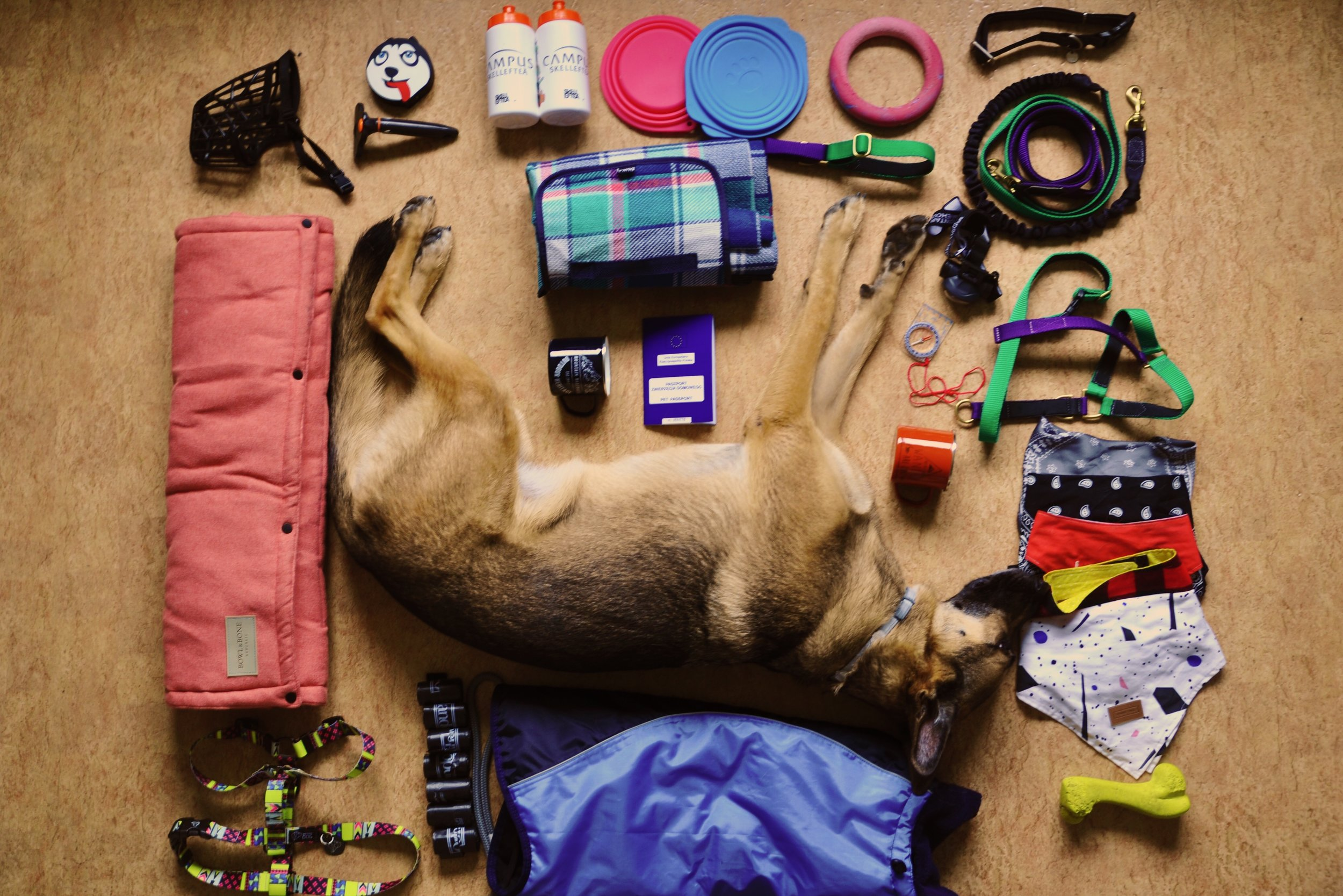 National Geographic Polska - Artykuł