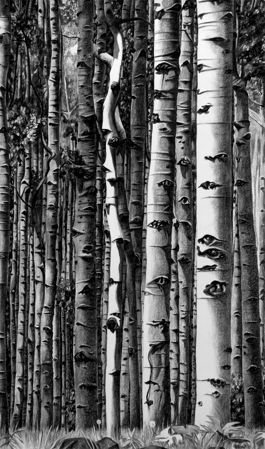 Up Among Aspens - High, 46 x 27 in, charcoal + conté on paper, 2015