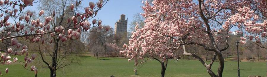 https://www.nycgovparks.org/parks/prospect-park , Photo by Daniel Avila