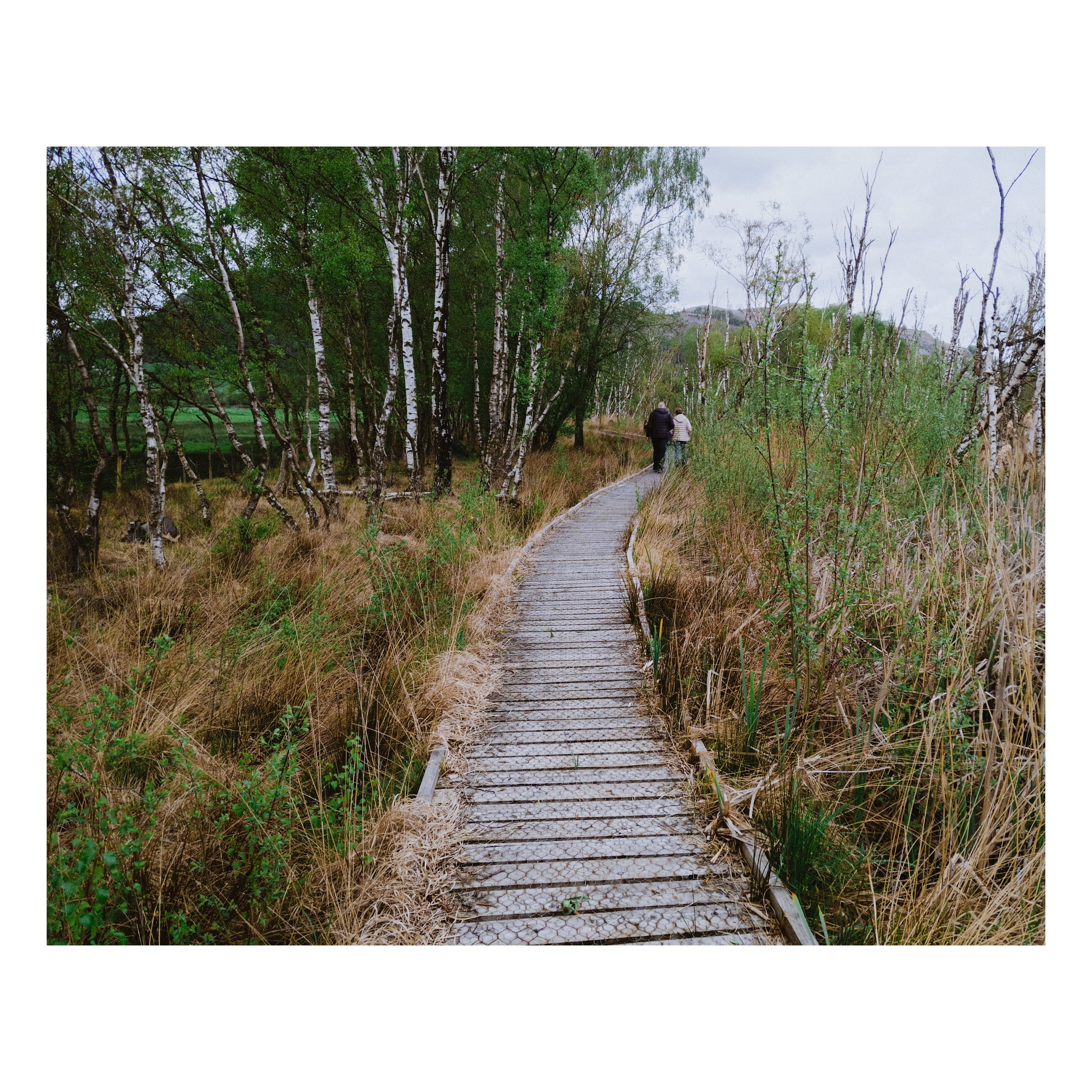 Boardwalks topped with chicken wire feature heavily in Foulshaw Moss, to provide a way through the Nature Reserve without disturbing the habitats of all the flora and fauna.