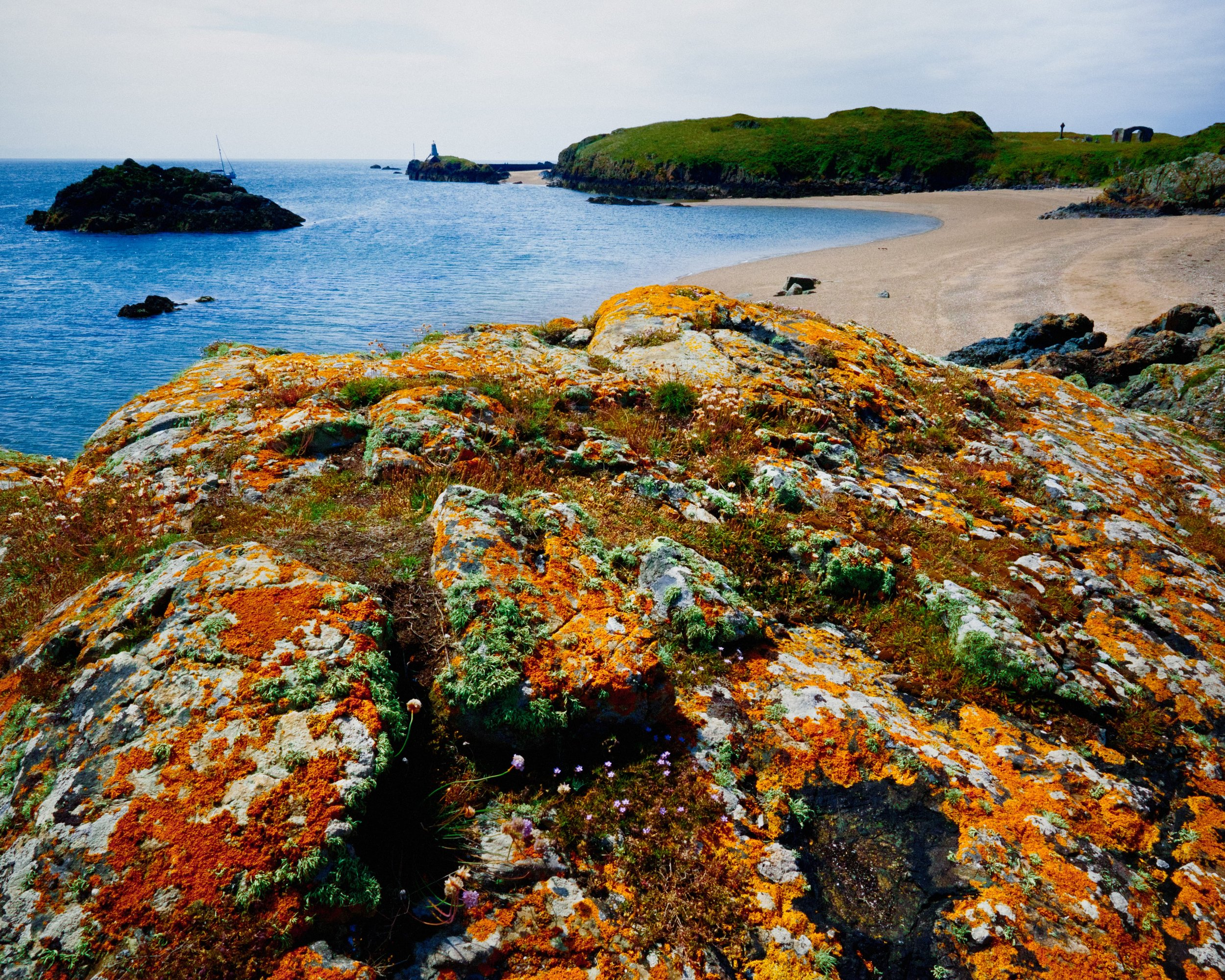 Ynys Llanddwyn, the spit of craggy land off Newborough beach in Anglesey, is a botanist's dream. Read the rest of this blog post here  https://www.iancylkowski.com/blog/2019/7/27/the-island-of-colourful-rocks