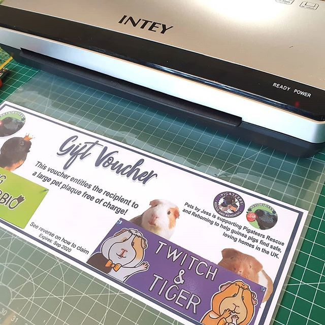 Been working on Guinea pig prints plus designing, printing and laminating a gift voucher for @pigateers_rescue ! 🐽🖨