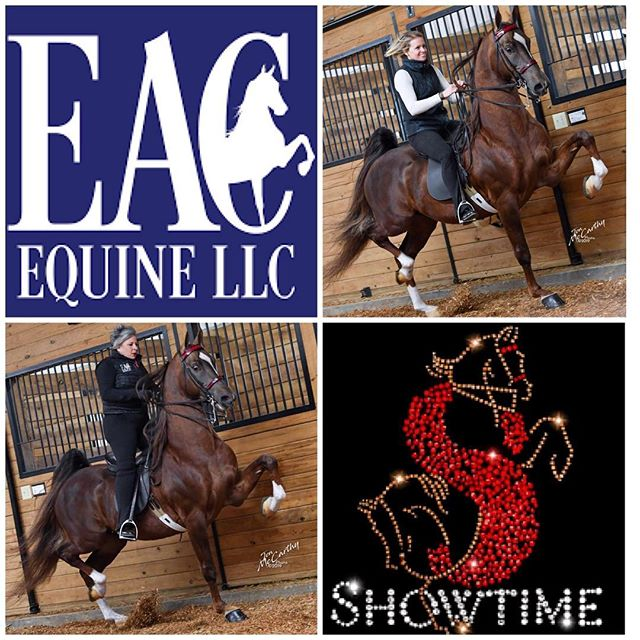 "In honor of both #TrotTuesday and the upcoming Pro-Am Horse Show in Perry, GA that benefits the Ronald McDonald House of Central Georgia, we excitedly share these photos of ""Elvis"" and (a few of) his leading ladies. 🥰 - ...which begs the question: who is having more fun catching the trot this #TrotTuesday? Elvis' professional trainer, Tish Kondas of Showtime Training Center? Amateur and proud owner, Colleen Cooper of EAC Equine? Or Elvis himself?! 🐴 - Like our page, share this post, and leave your fun comment for a chance at winning a $100 donation from EAC to the charity of your choice. Winner will be announced this #FoalFriday at 5pm EST. 🥳 - Best of luck to everyone at the Pro-Am! #eacequine #auao #asbdreams #trotlikeagirl 🤩 - Visit our profile for more info on how to get your mare #bredbyelvis. (Photo Credit: the incredible Jon McCarthy!)"