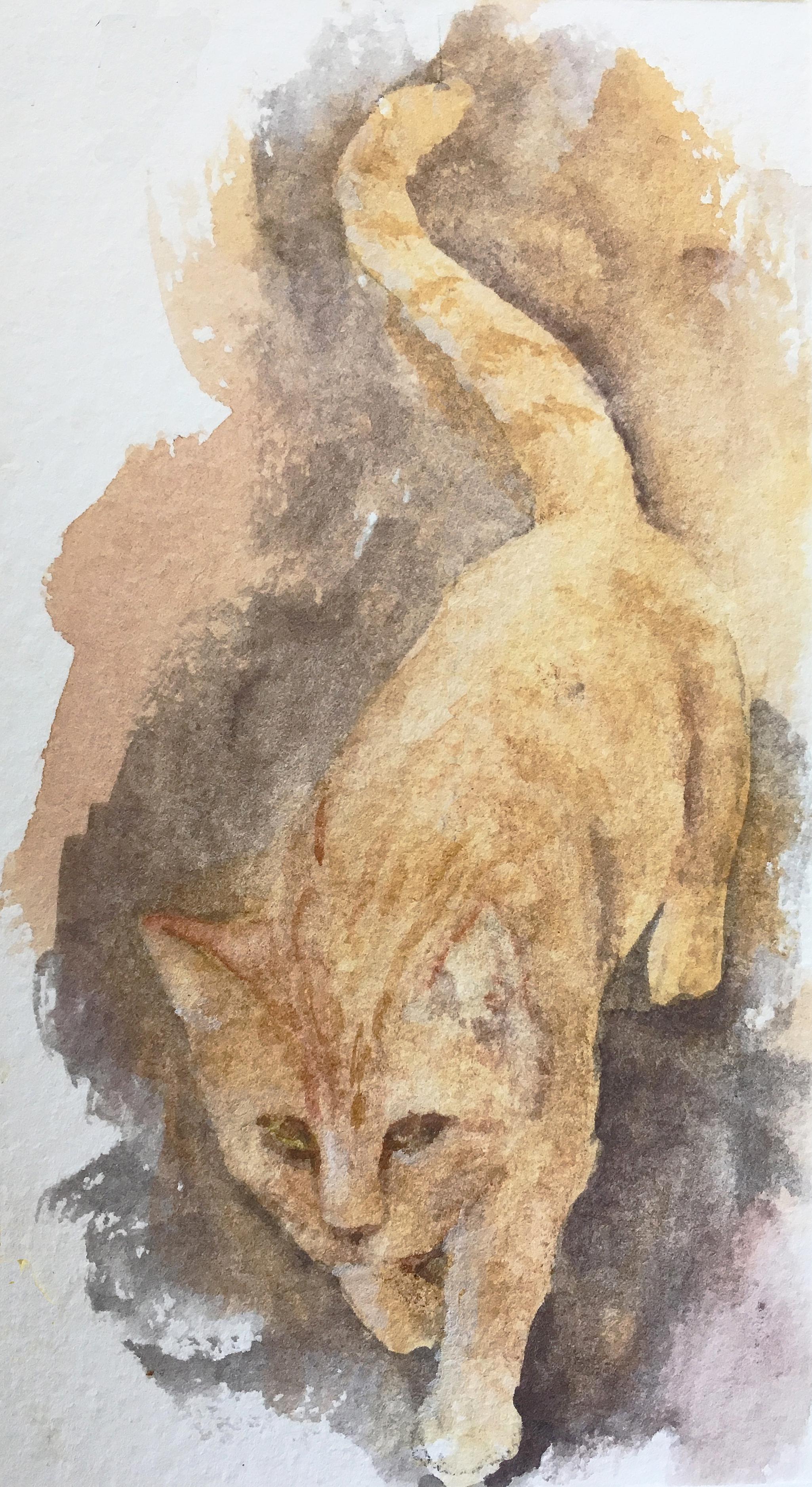 orange cat of Seguret.jpg
