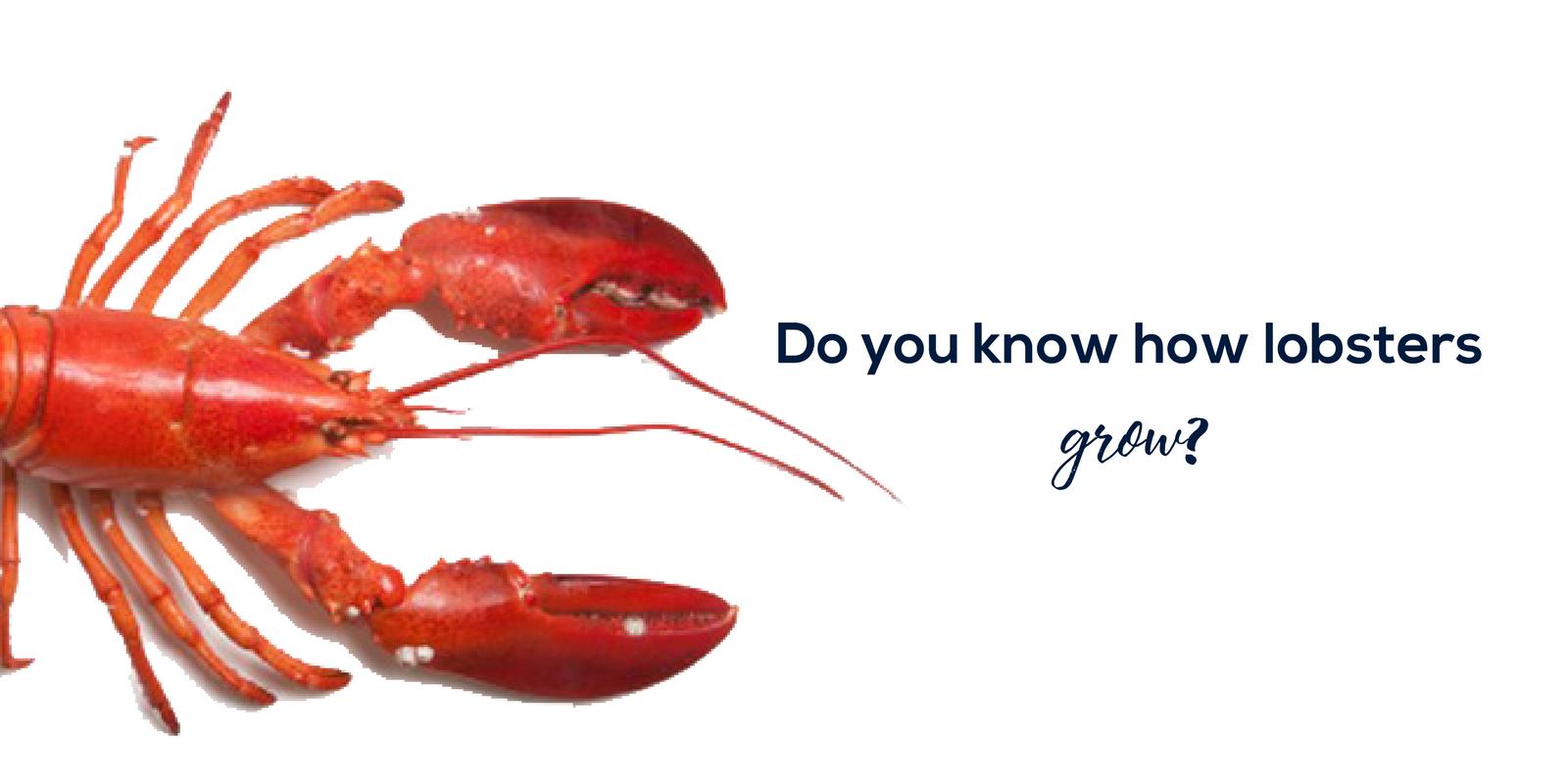 Lobsters.png