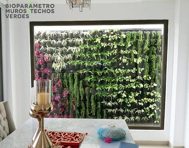 Disfrutando de esta vista 🙌 Living wall 💚 #murosverdes #paredvegetal #design #plantas #biopaneles #jardinesverticales