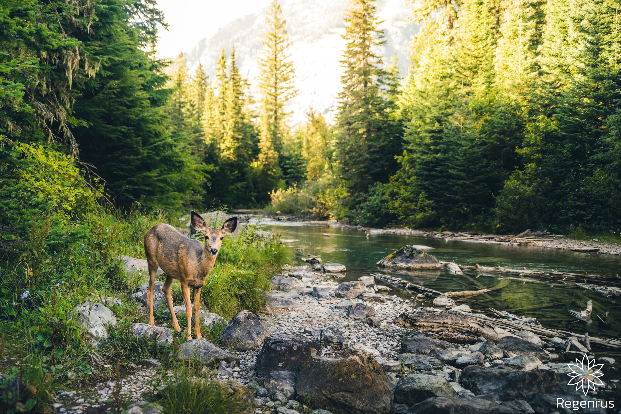 When we take time to cultivate from the heart, environments like the animal ecosystem benefit greatly.