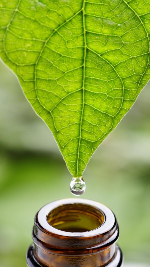Regenrus Plant To Bottle.jpg