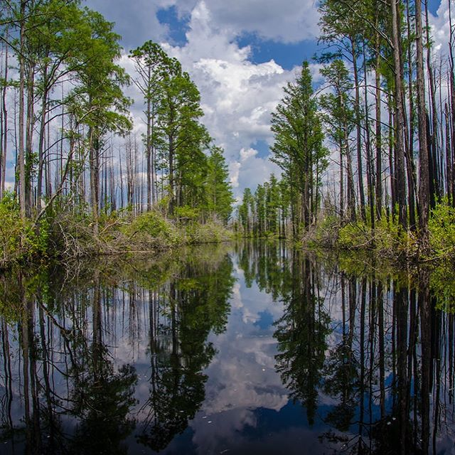 Okefenokee Swamp, considered to be one of the Seven Natural Wonders of Georgia, is in jeopardy. Join us August 5th at 12 pm for a LUNCHTALK with @gaconservancy to learn more. #ideas #futureofcities #byol #nature #wetlands