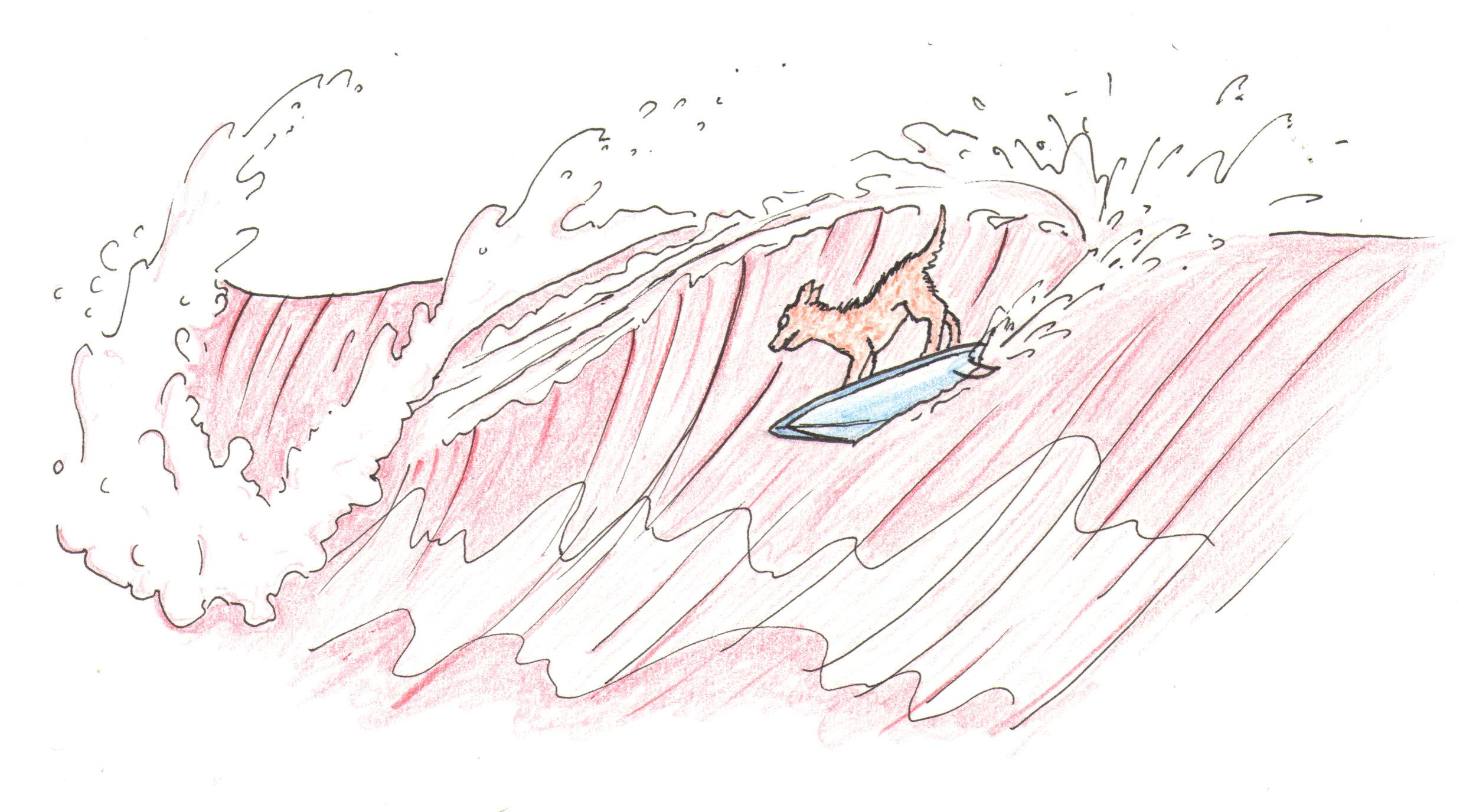 surfing dog tyler warren.jpg