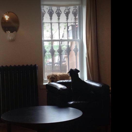 Gypsy observes Brooklyn.