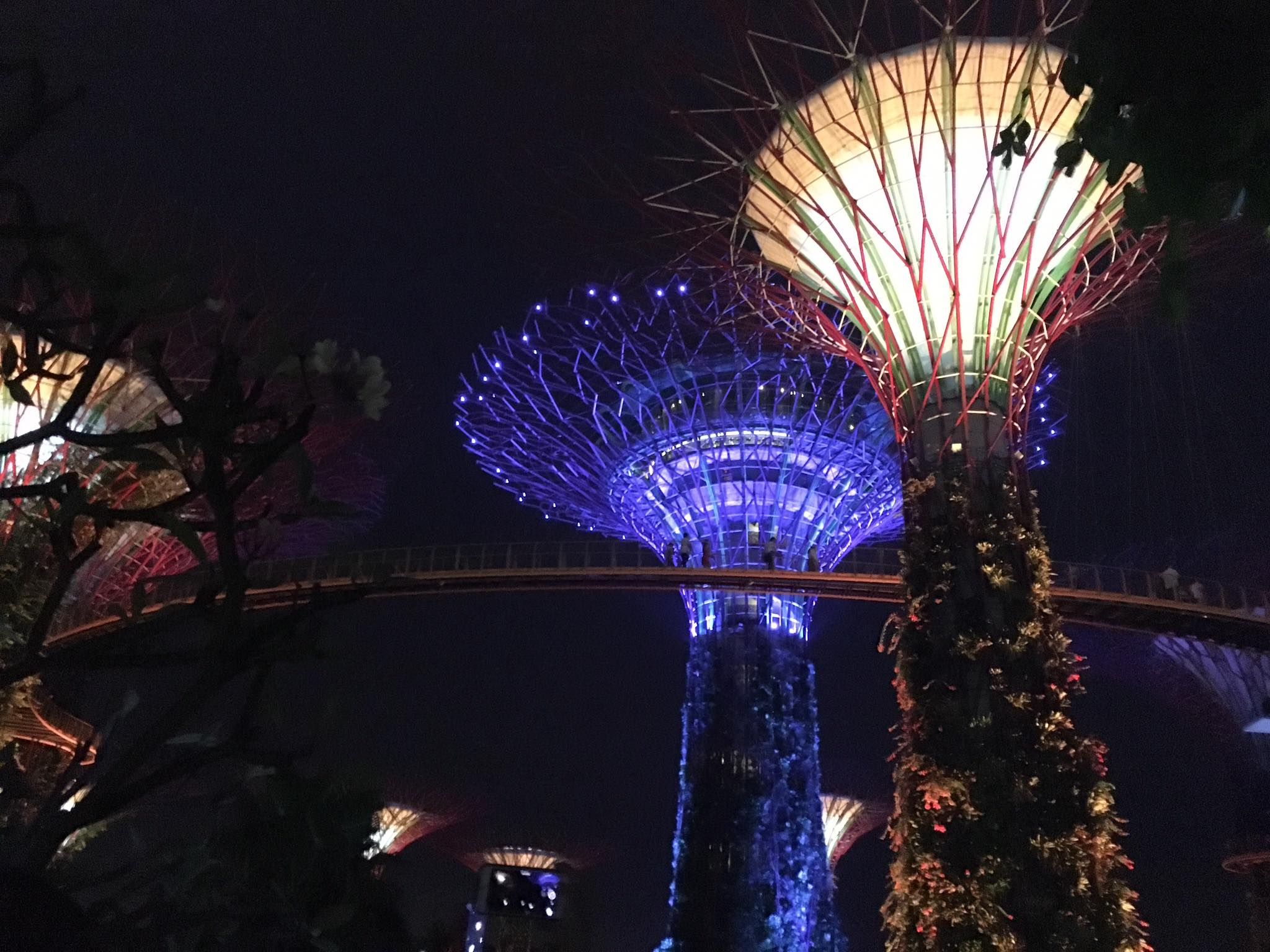 The Super Trees in Garden by the Bay