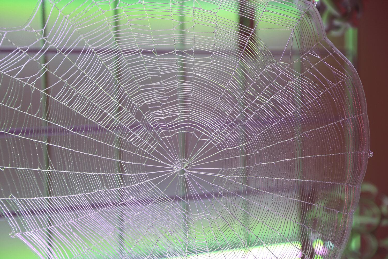 brightwebdetail_1500.jpg