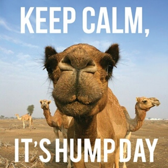 101843-Keep-Calm-It-s-Humpday.jpg