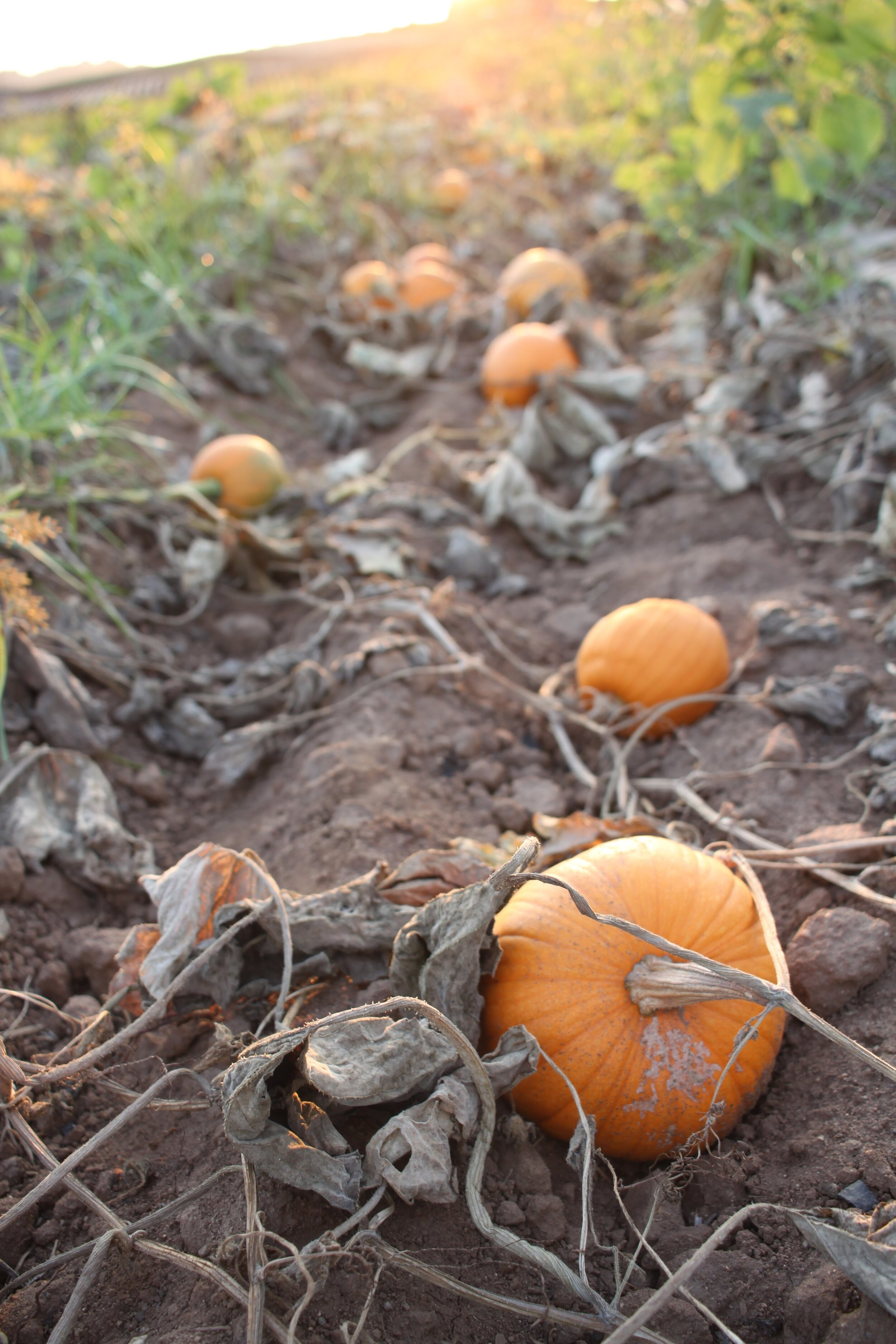 What's in season during the fall