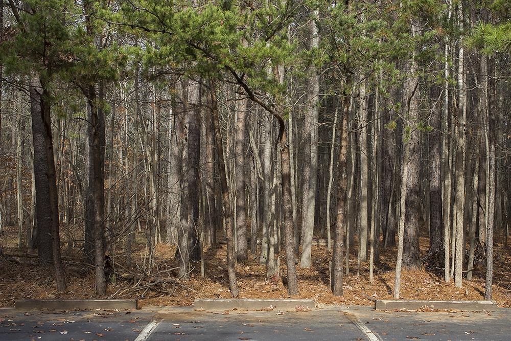 Reedy Creek Nature Preserve