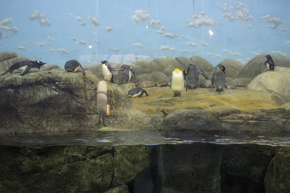 Penguin Coast, South Carolina
