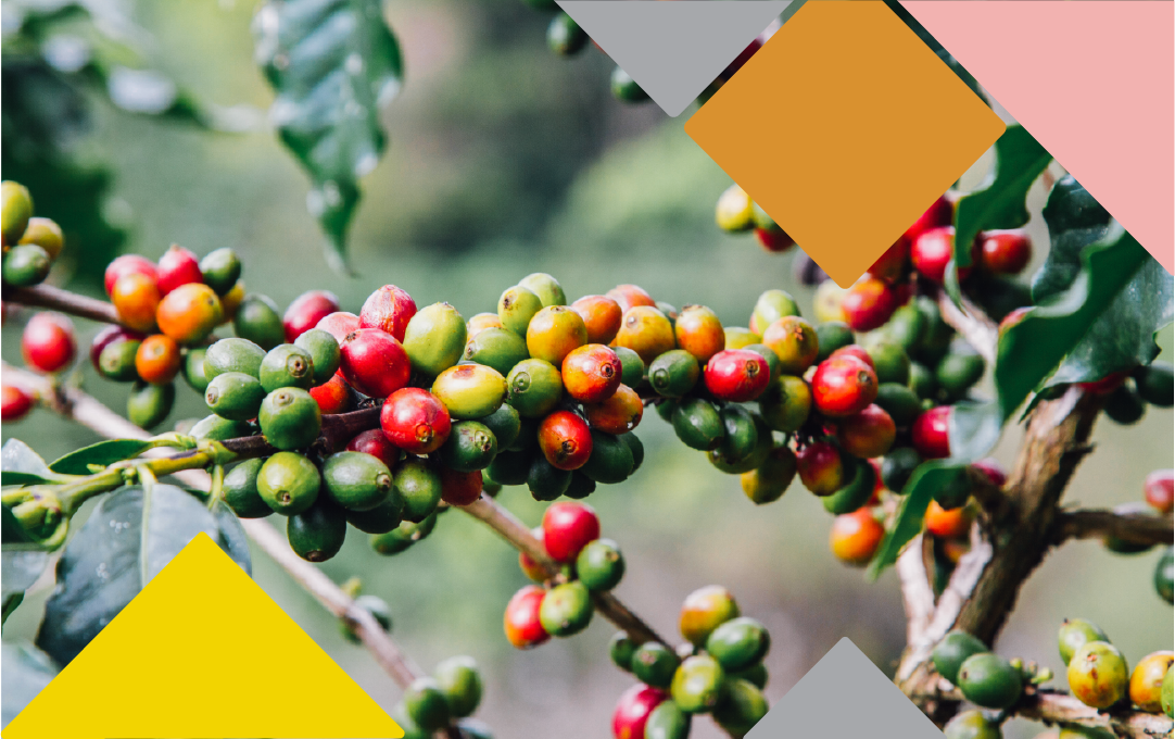 Sustainability Conference focused on making coffee better. -