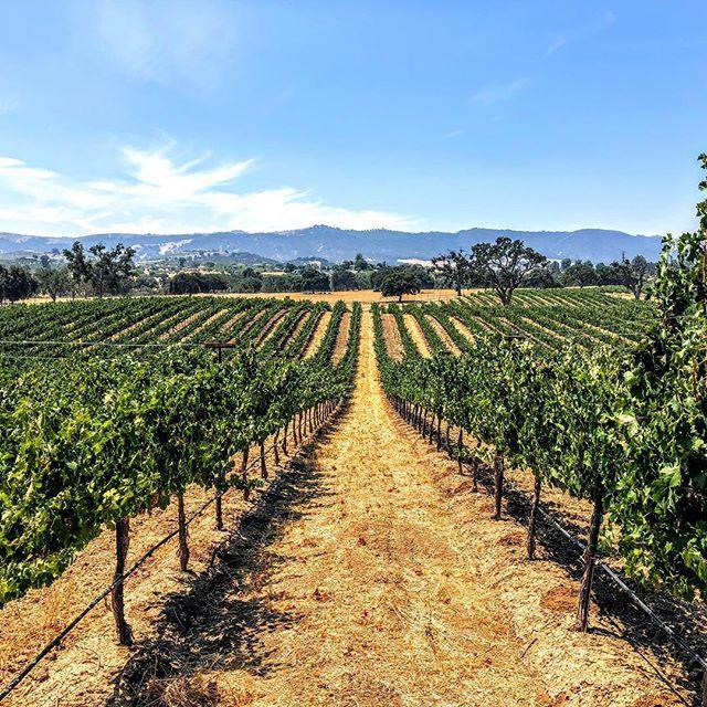 Enjoying this tail-end of summer! . . . #amadorwine #sierrafoothills #zeila #makingwineco #clockspring #tempranillo #cabernet #petitesirah #winelover #instawine #vines #vineyards