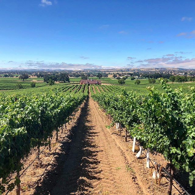 What are you drinking this #winewednesday?  #makingwineco #zeila #clockspring #zinfandel #tempranillo #cabernet #petitesirah #amador #sierrafoothills #amadorwine #vines #vineyards #wine