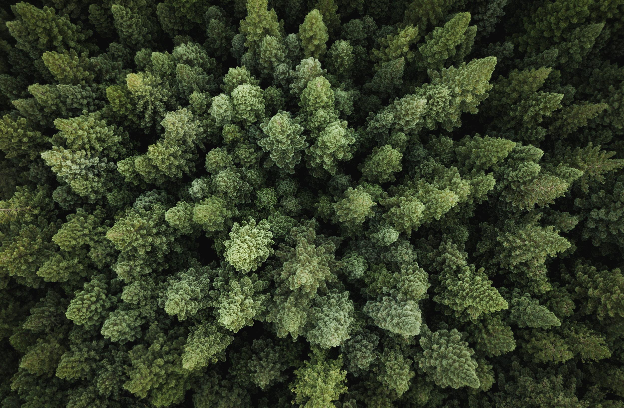 DroneForest.jpg