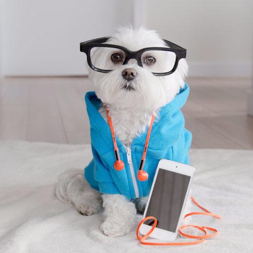 致單身狗:一個人還是可以好好過