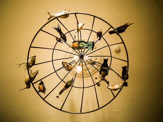 birdlight.jpg