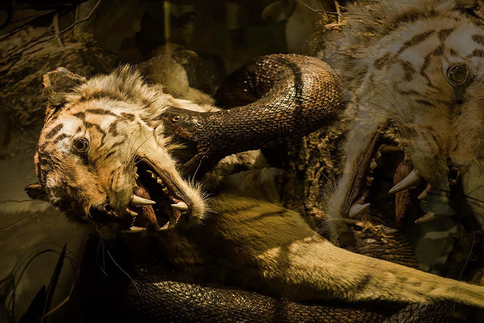 'Tiger & Python' Natural History Exhibit