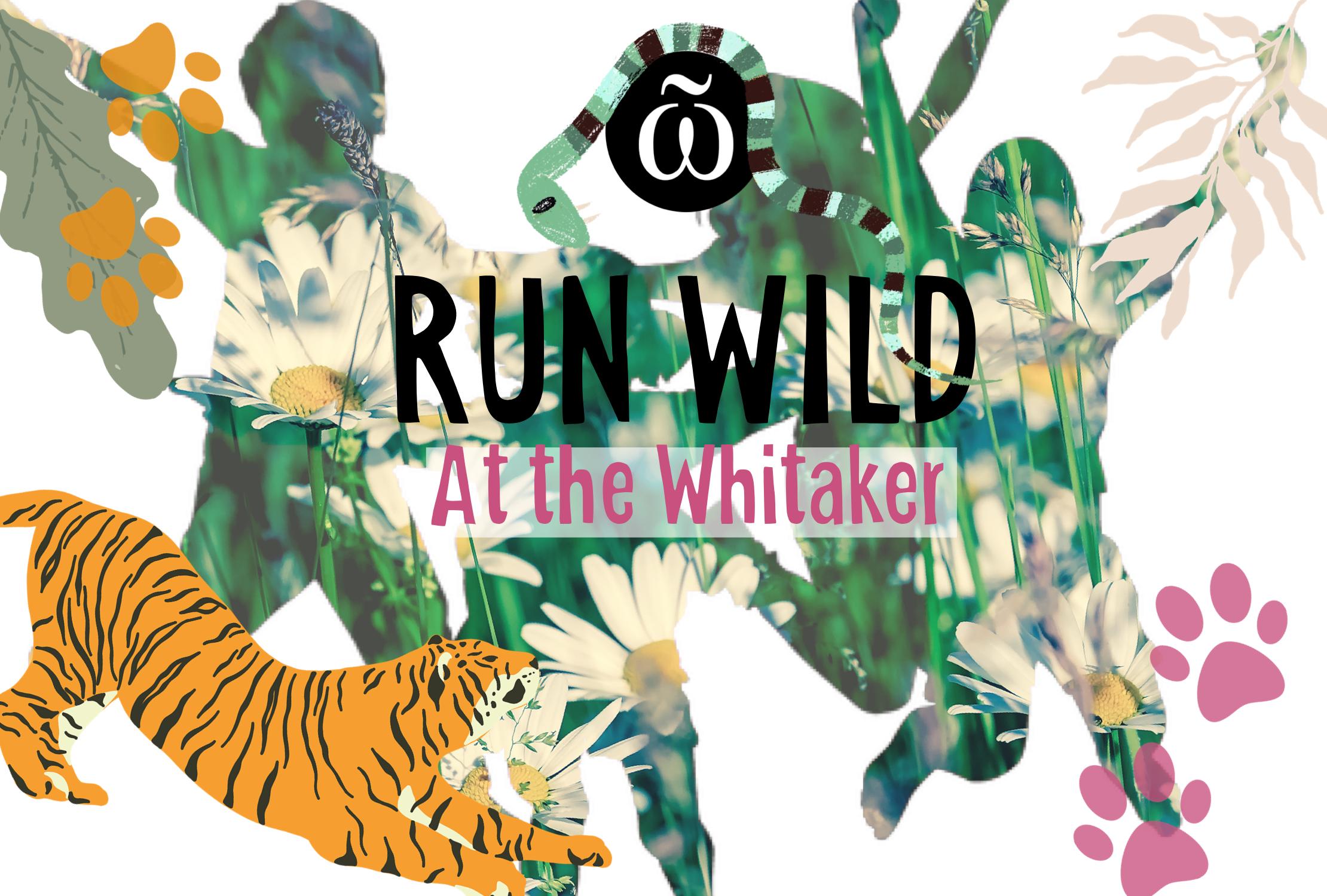 Run wild at the Whitaker