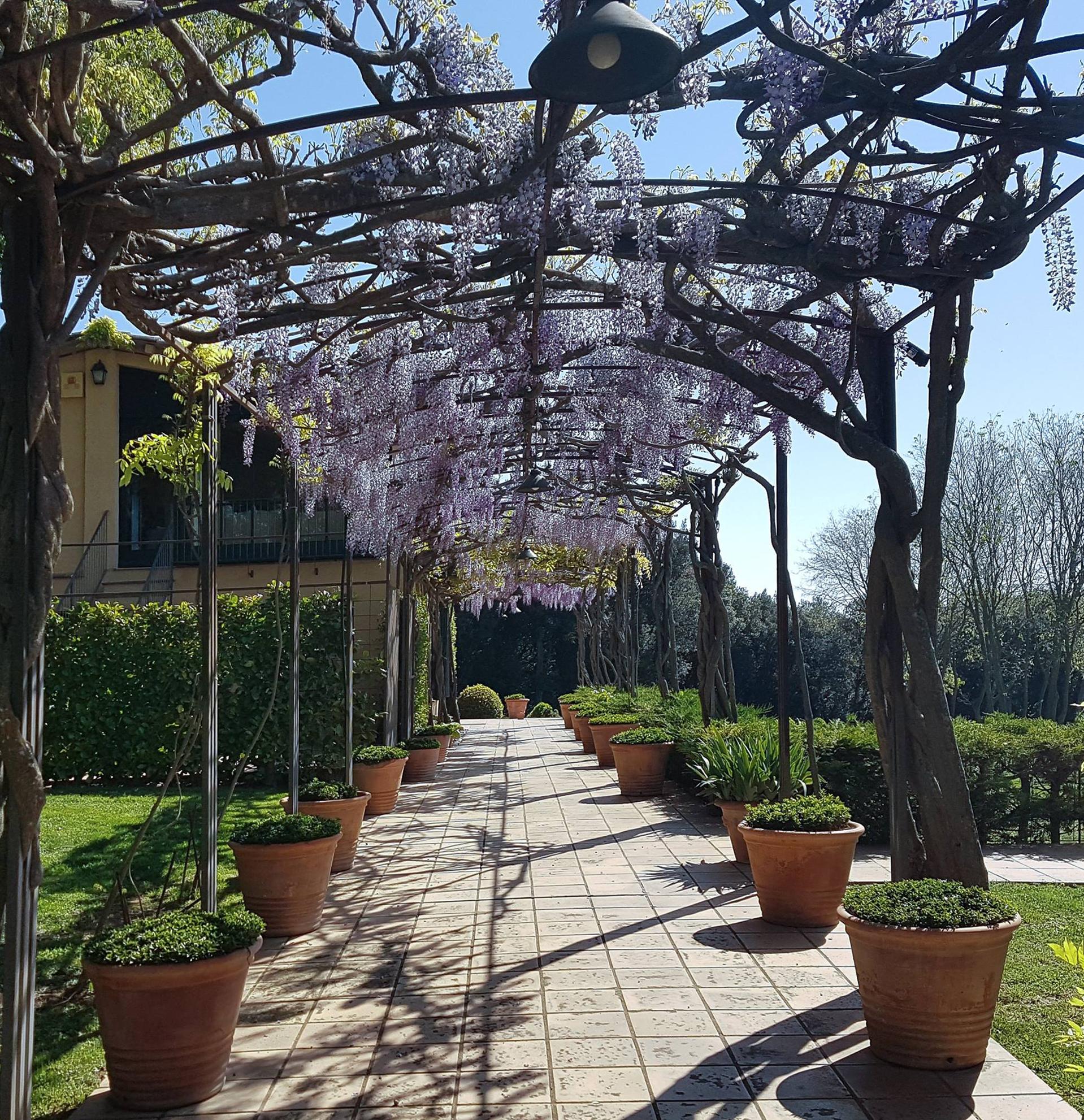 entrance bloomed wisteria.jpg