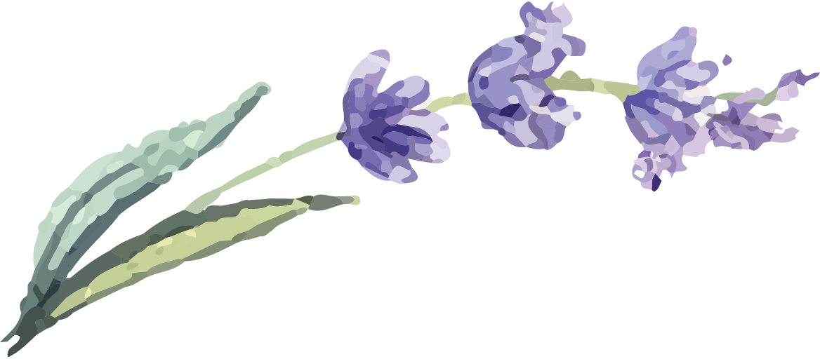 lavenderpng.png