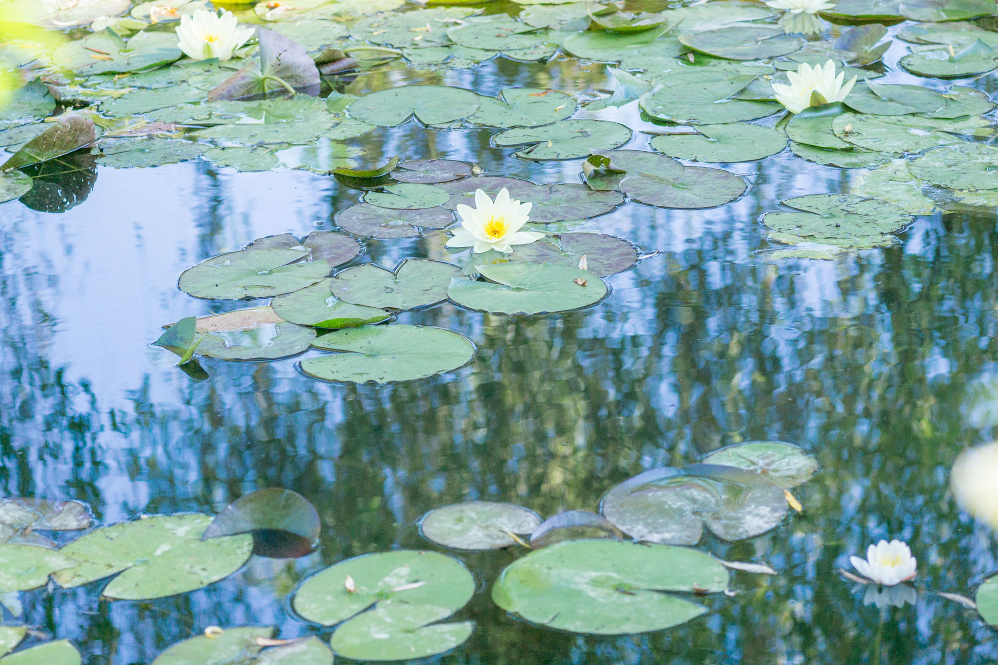 Monet's Garden | Giverny Travel Guide | Experience Claude Monet's magical garden in Giverny, France with this beautiful and handy travel guide.