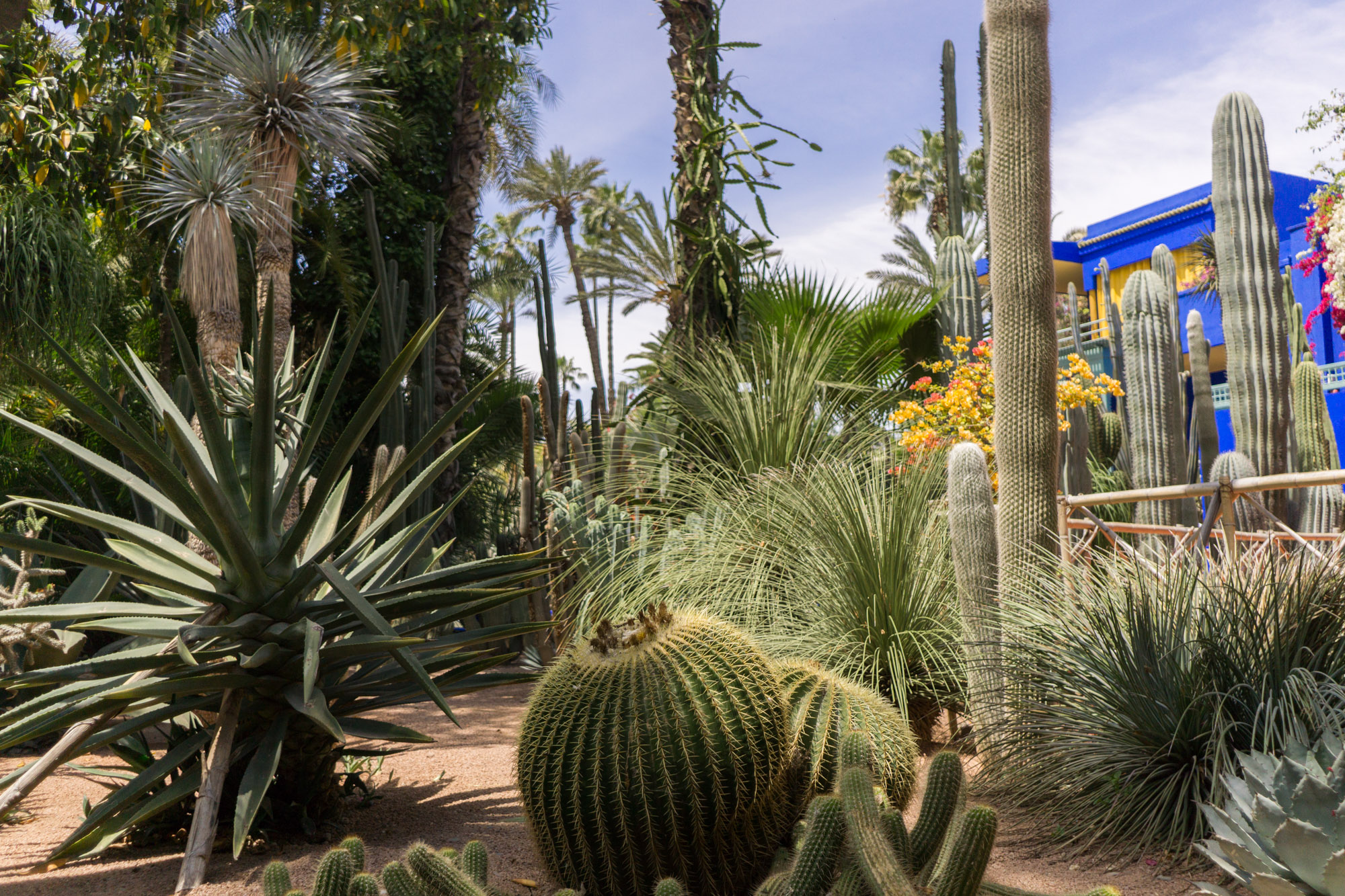 Jardin Majorelle Travel Guide | Marrakesh Travel Tips | Experience the incredible Jardin Majorelle where Yves Saint Laurent once lived with this inspiring travel guide.