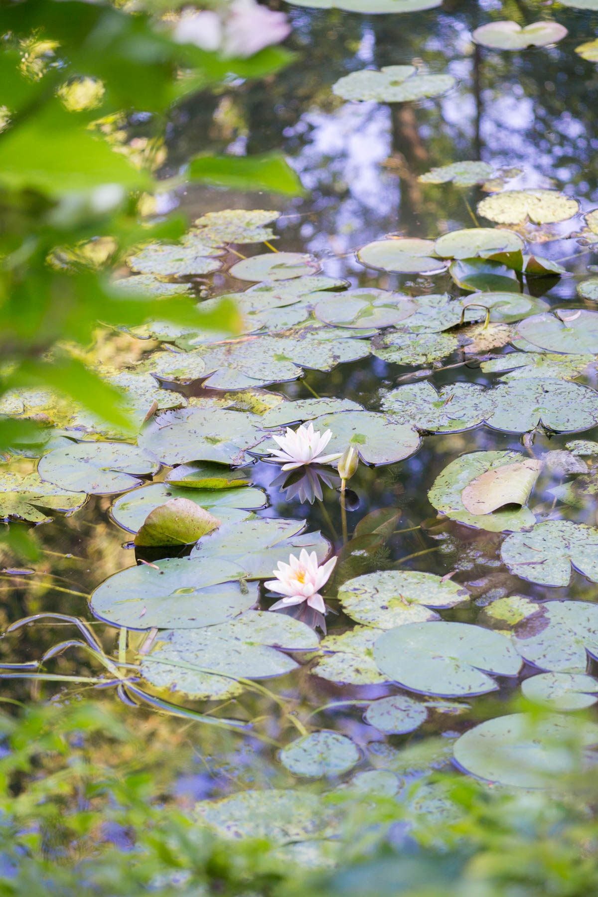 Experience Claude Monet's magical garden in Giverny, France. | Monet's Garden | Paris Day Trip | France Travel Tips