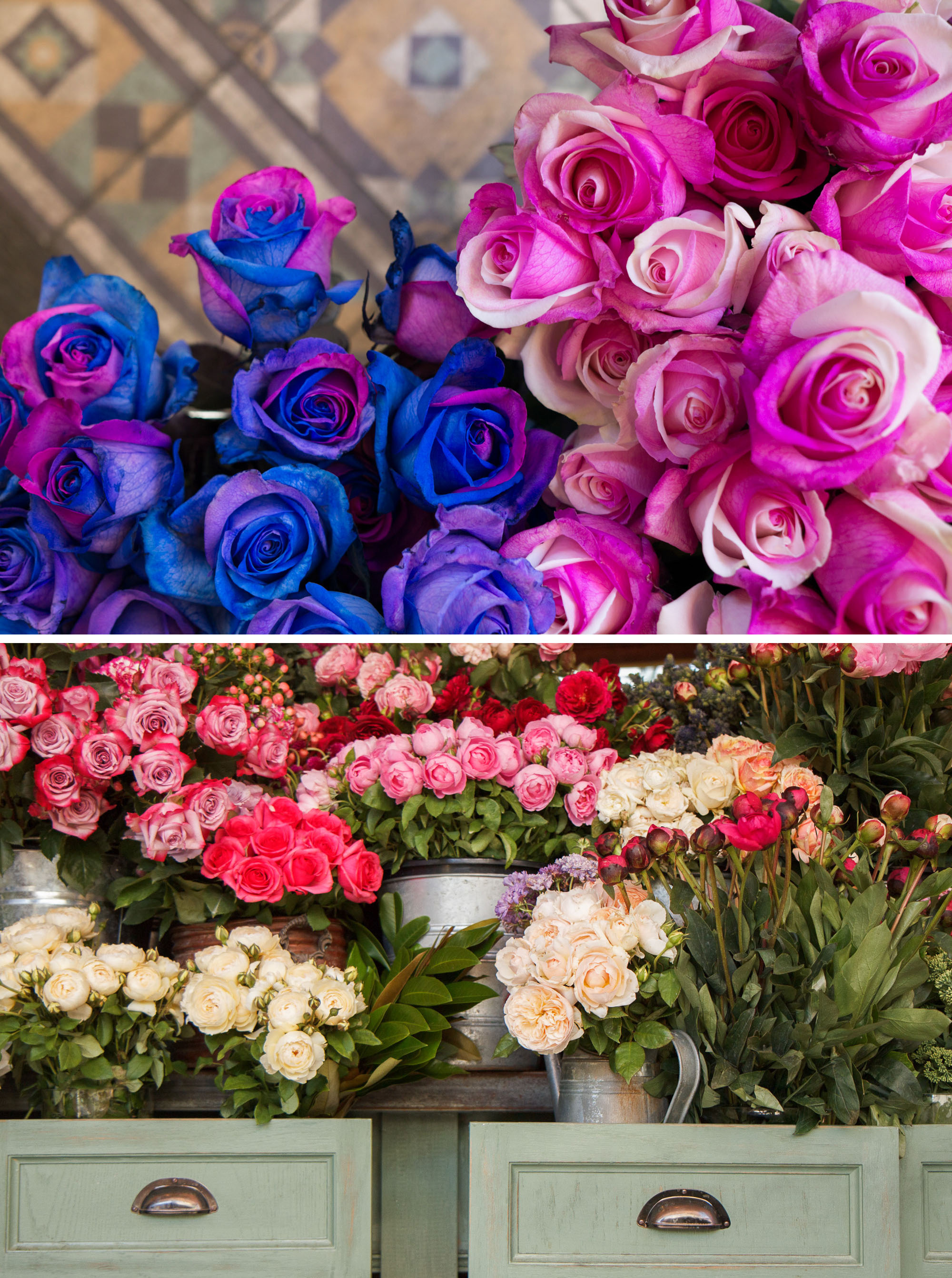 Sydney Flower Guide | Sydney Travel Tips | Sharing where to pick up gorgeous blooms in Sydney, Australia with this handy, floral filled guide.