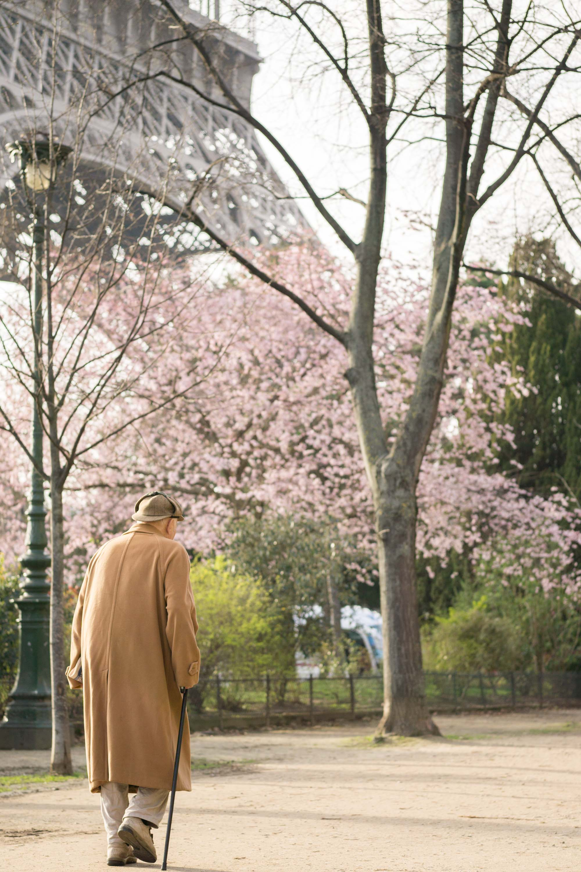 Champ de Mars | Discover where and when to find cherry blossoms and other gorgeous spring blooms with this floral filled, Paris travel guide.