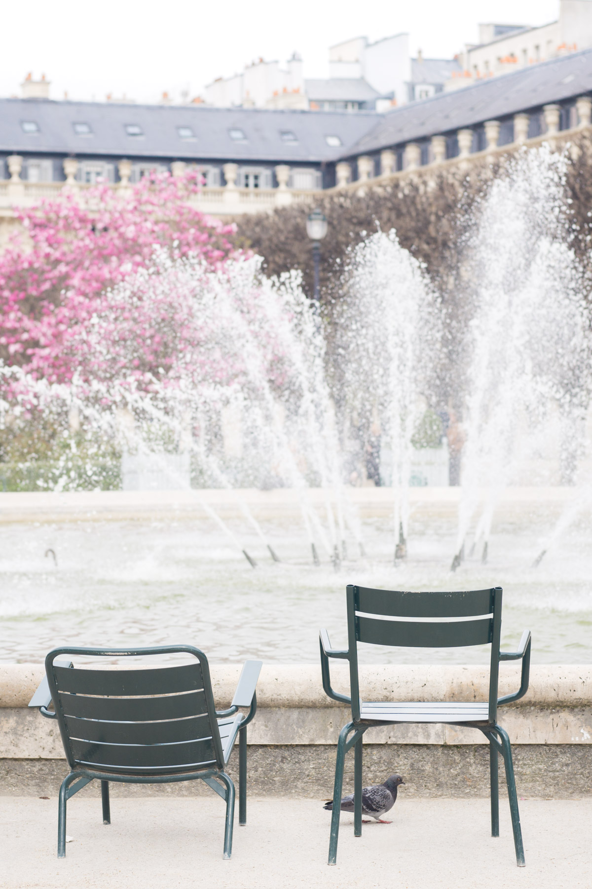 Your Guide to Paris Spring Flowers | Discover the best places to experience beautiful spring blooms in Paris with this floral filled travel guide. | Christie Moore Photography