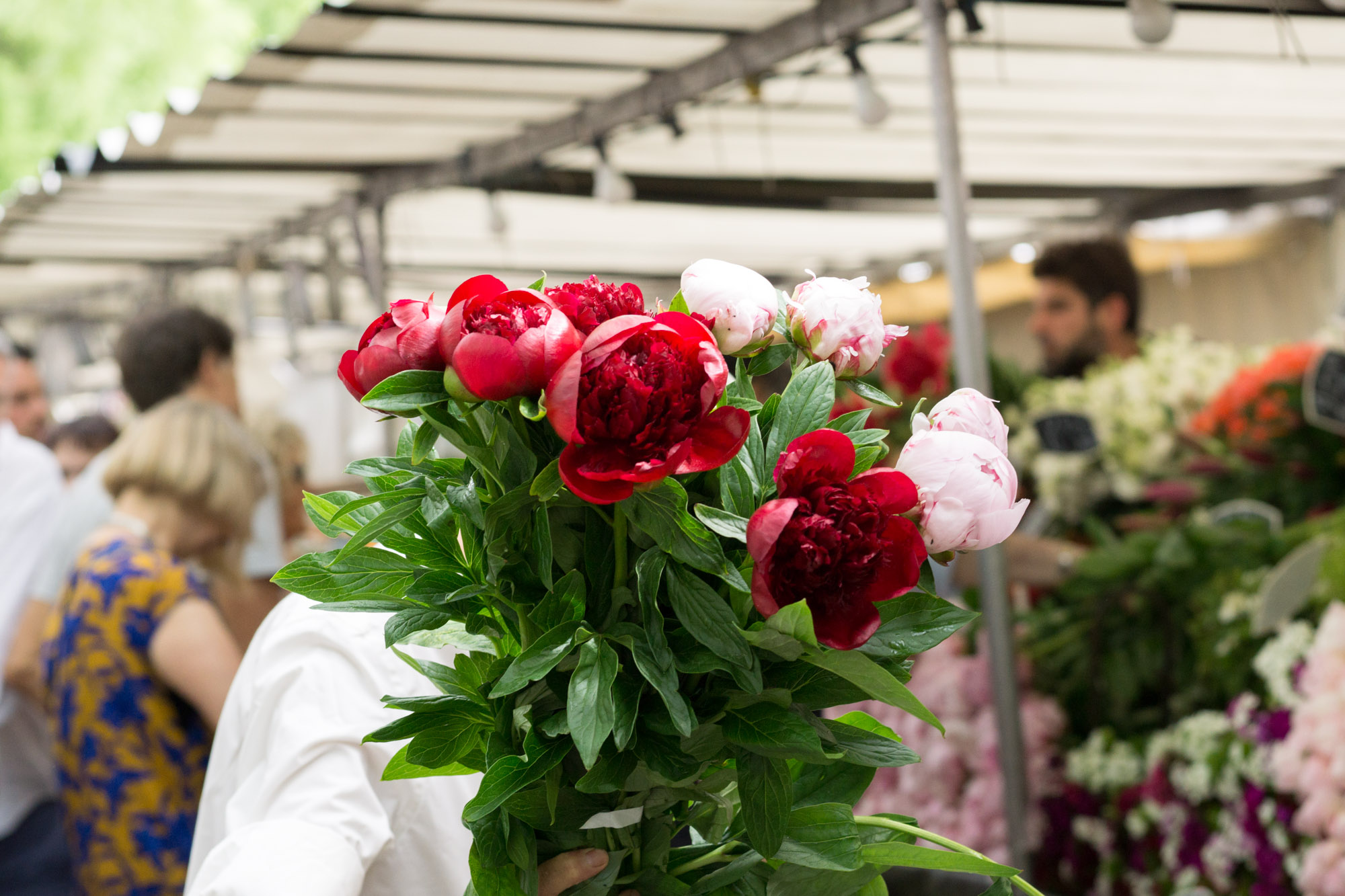 Love peony season?! Discover the best markets in Paris markets for beautiful peonies | Peony season in Paris | Paris Flower Markets