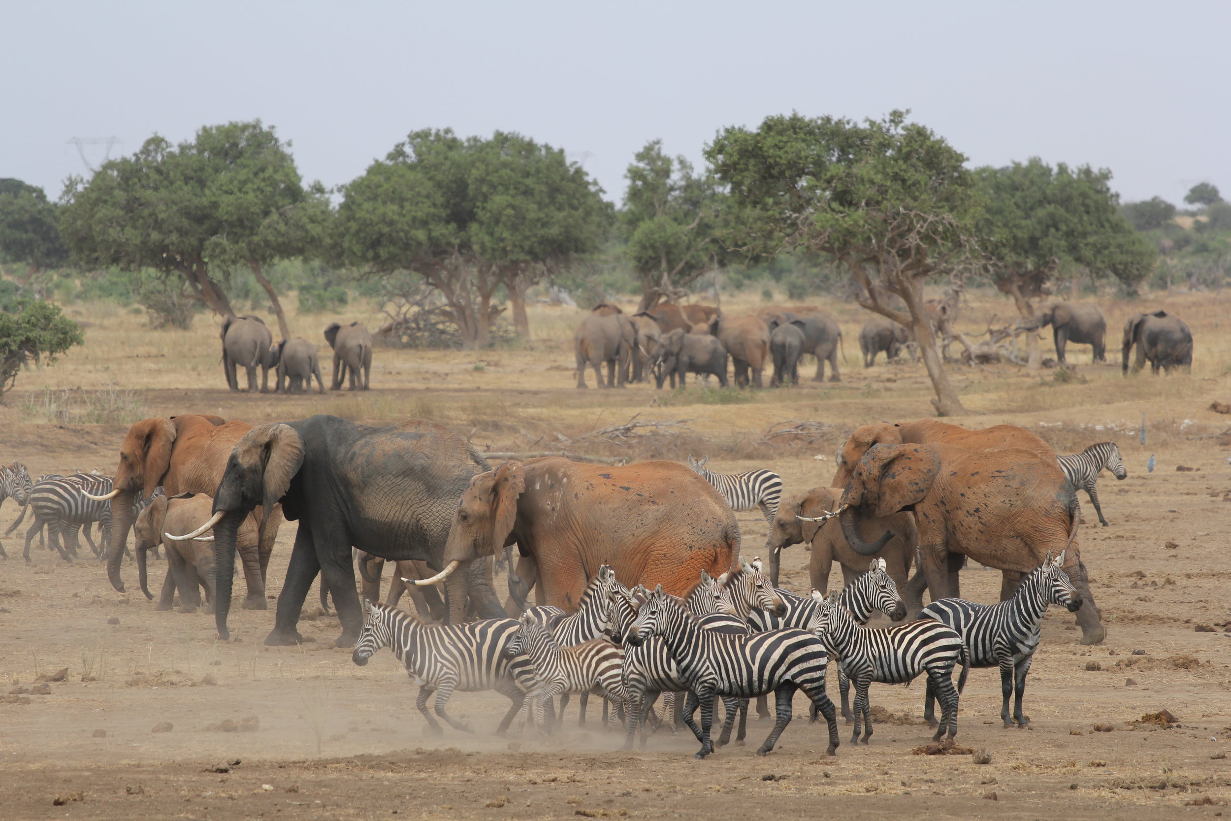 Animals gathering to the watering hole right next to our tents, one of the most incredible experiences ever.